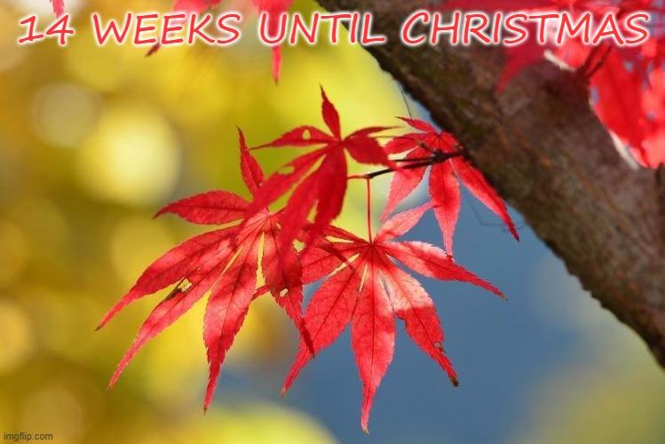 14 weeks.jpg