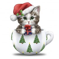 kitten_k